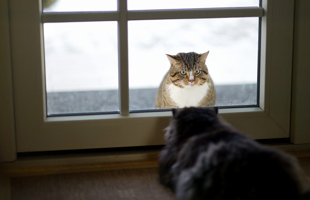 Two cats staring at each other through a window
