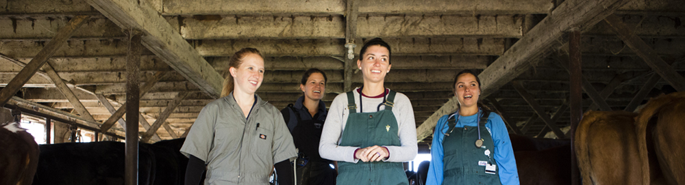 10/12/2017 - Pomfret, Conn. - Veterinarian Lindsay Philips and students of the Tufts Ambulatory Service check the pregnancy and fertility status of dairy cows at B&R Simmentals farm on October 12, 2017. (Anna Miller/Tufts University) PHOTO RELEASE ON FILE