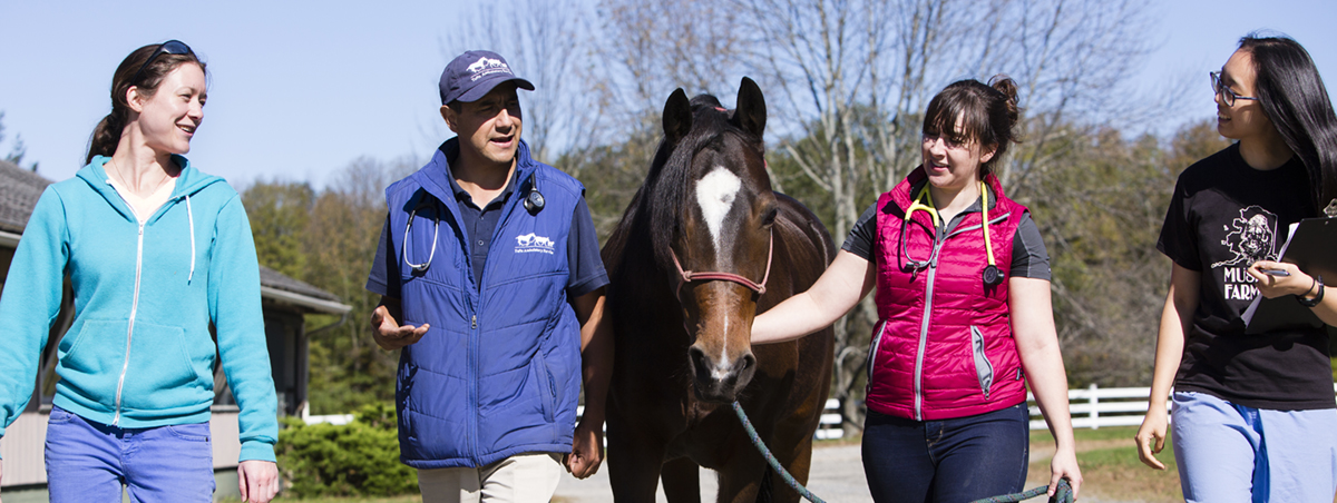 10/12/2017 - Hampton, Conn. - Veterinarian Alfredo Sanchez and a team of students from the Tufts Ambulatory Service, tend to Fiona the horse at Hampton Hill Farm on Oct. 12, 2017. Sanchez adopted the horse, who is mostly blind. From left: Abby Pisinski, V18,  Alfredo Sanchez, Associate Professor and Veterinarian, Megan Andreassi, V18, and Christina Chen, V18. (Anna Miller/Tufts University) THE HORSE FIONA IS OWNED BY Prof./Vet Alfredo Sanchez, who is included in the photo.