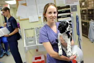 Student at Lerner Spay/Neuter Clinic