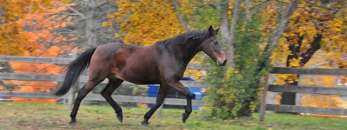 horse trotting in the grass with fall leaves and trees in the background