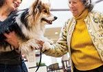 06/29/2013 - Marlborough, MA - Ida Sawosta plays with Penny, as Tufts veterinarians Lisa Freeman (curly hair) and Deb Gibbs bring Penny, a fluffy Corgi, and Boo, a Shi Tzu, to visit residents at the New Horizon's Assisted Living Community. (Dominick Reuter for Tufts University)