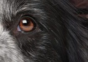 close-up of a dogs eye