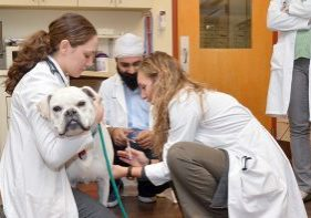 Pet-Chemotherapy-cropped