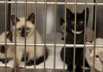 Patients at the Luke and Lilly Lerner Spay/Neuter Clinic.