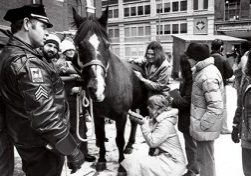 Policehorse_exam_boston.jpg