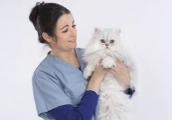 12/16/2016 - Grafton, Mass. - Kristen Antoon, Veterinary Technician II, poses with a Persian cat for a stock photo of human-animal interaction at the Cummings School of Veterinary Medicine on December 16, 2016. (Alonso Nichols/Tufts University)