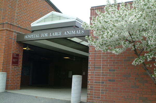 Hospital for Large Animals Exterior