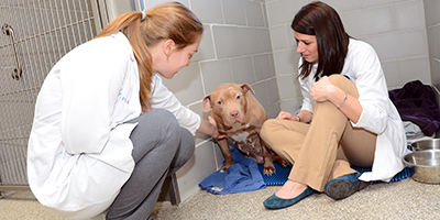 Patient (dog) at Foster