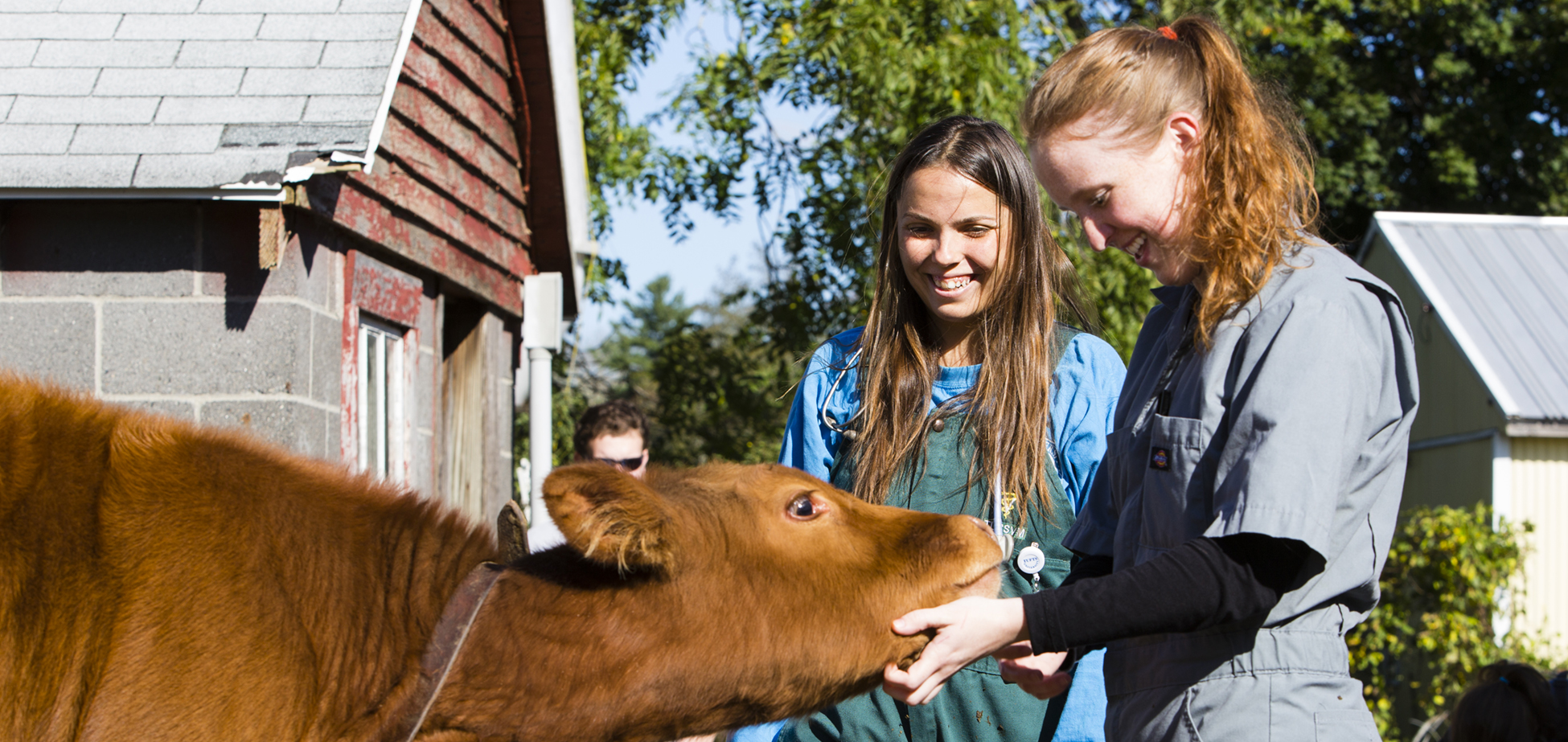 10/12/2017 - Pomfret, Conn. - Veterinary students Maria Kremerman (left) and Kelsey O'Donnell, V18, visit a young calf during a house call at B&R Simmentals farm on October 12, 2017. (Anna Miller/Tufts University) PHOTO RELEASE ON FILE