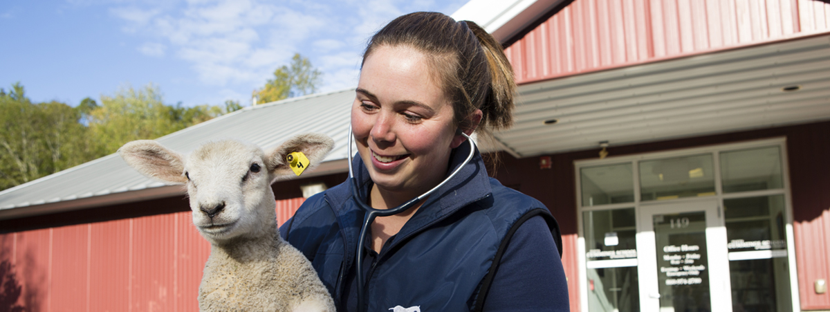 10/12/2017 - Woodstock, Conn. - Veterinarian Rachael Gately holds a lamb outside of the entrance to the Tufts Ambulatory Service on October 12, 2017. (Anna Miller/Tufts University) SHEEP OWNED BY Prof. Rachael Gately, who is holding them in the photo. She brought them in for the photo shoot specifically.