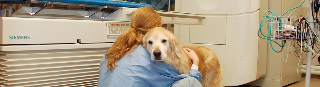 Yellow lab in oncology