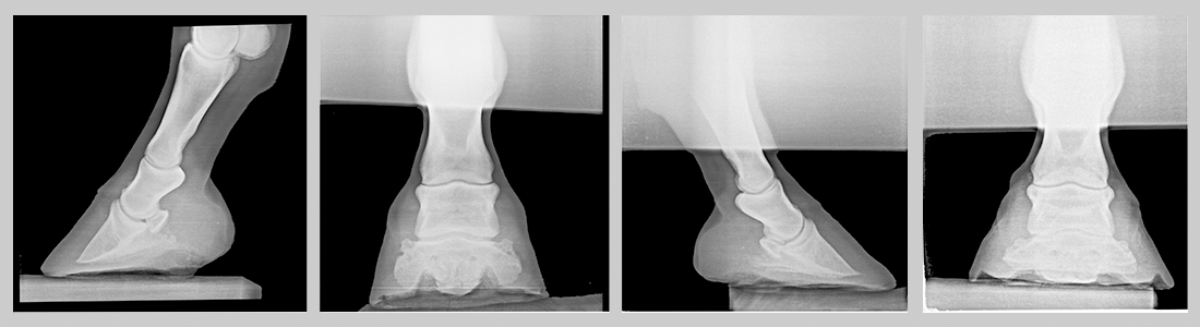 routine-radiographs-horse