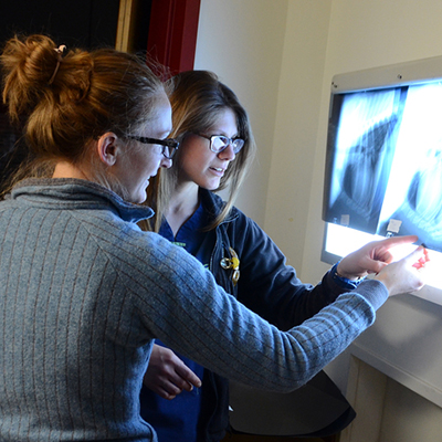Students of the Cummings School of Veterinary medicine working with patients and faculty during their Diagnostic Imaging Clinical Rotation.